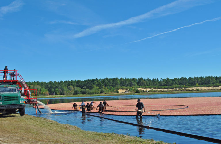 Cranberry Growers Celebrate 200 Years in Massachusetts