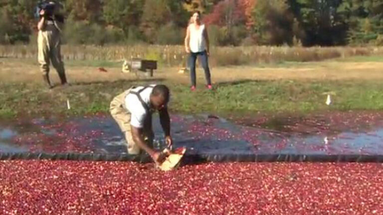 Cranberry Farmers Upbeat About Harvest Despite Challenges